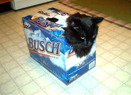 Image drole et amusante Carrier-chat_biere.jpg