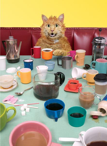"""Résultat de recherche d'images pour """"chat café"""""""